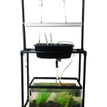 How to Turn Your 10-gallon Aquarium into an Aquaponics System